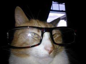 Smart cat with glasses on