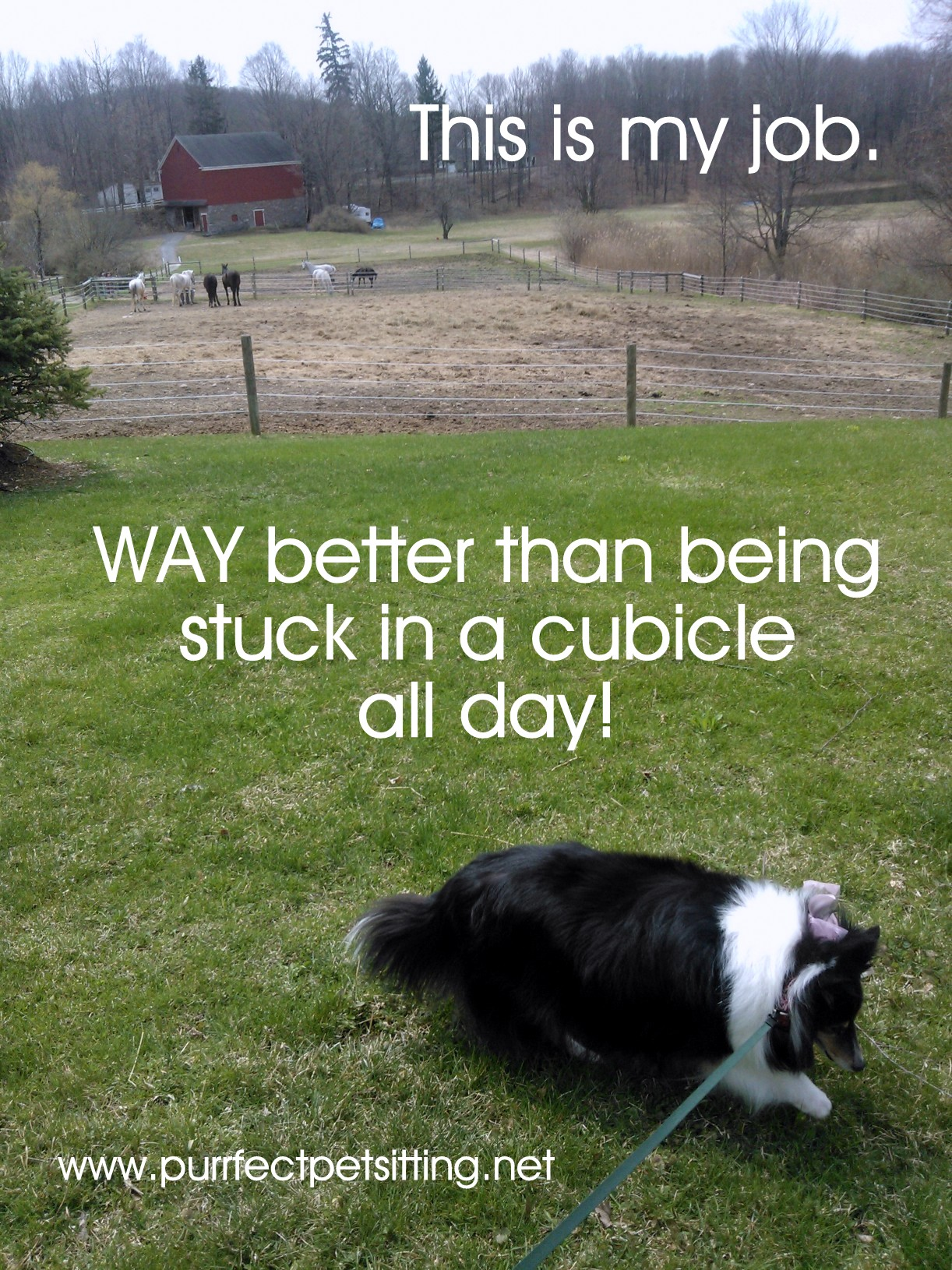 Why Pet Sitting Is An Awesome Part Time Job - We Are ...