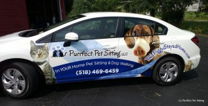 wrapped pet sitting car