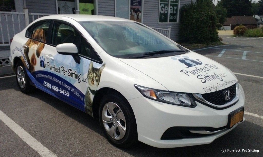 wrapped pet sitter car