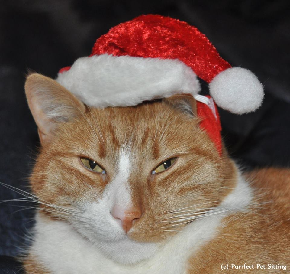 orange cat wearing santa hat