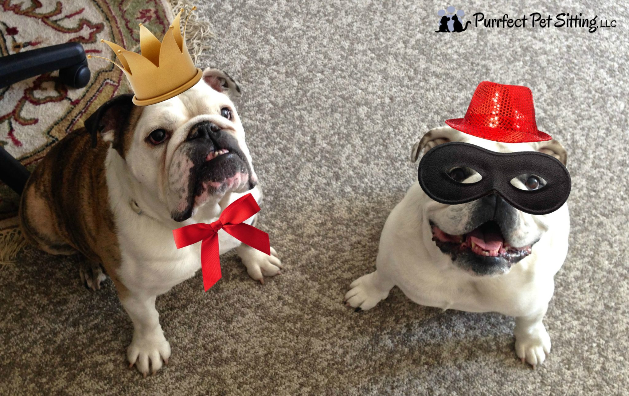 bulldogs with party hats