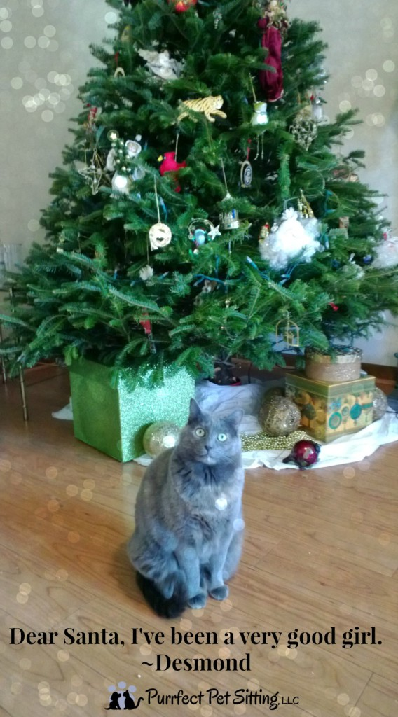 tortie cat under christmas tree