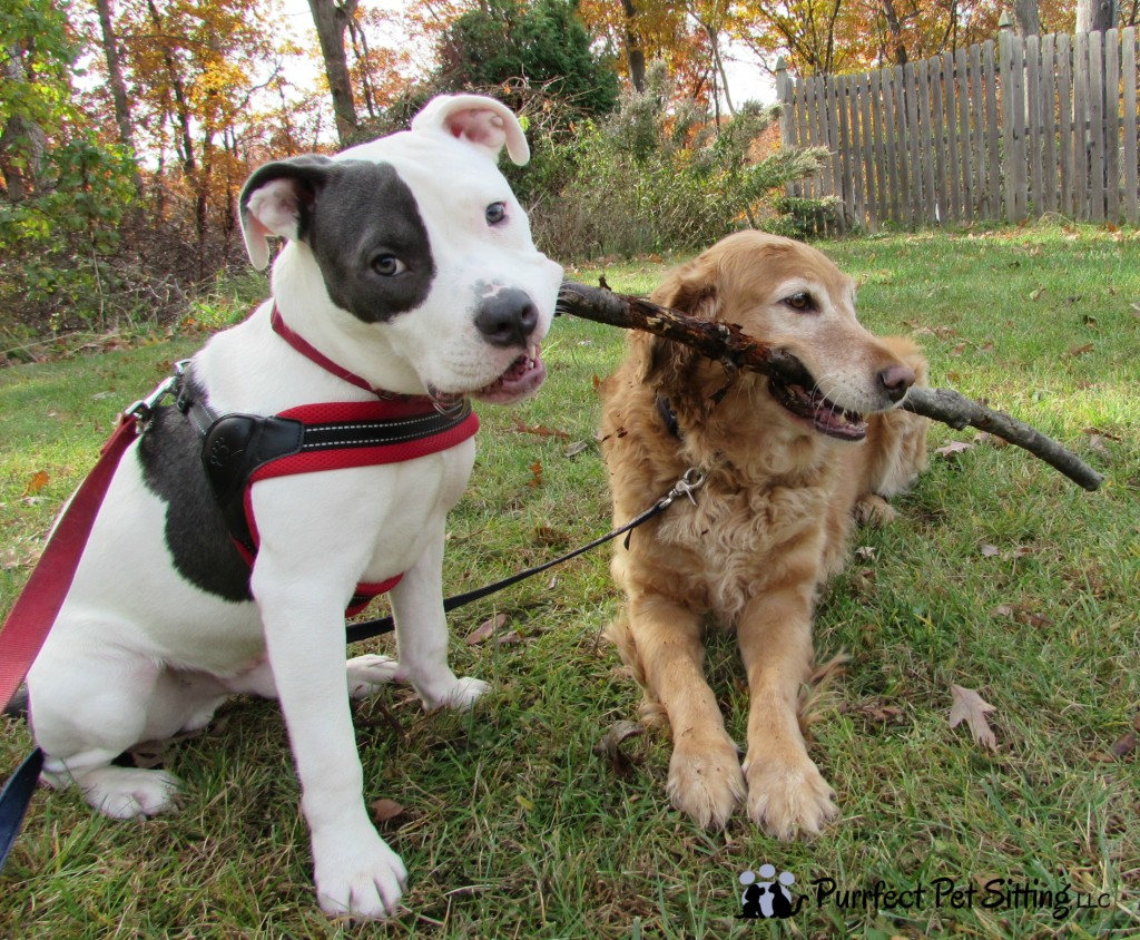two dogs chewing on stick