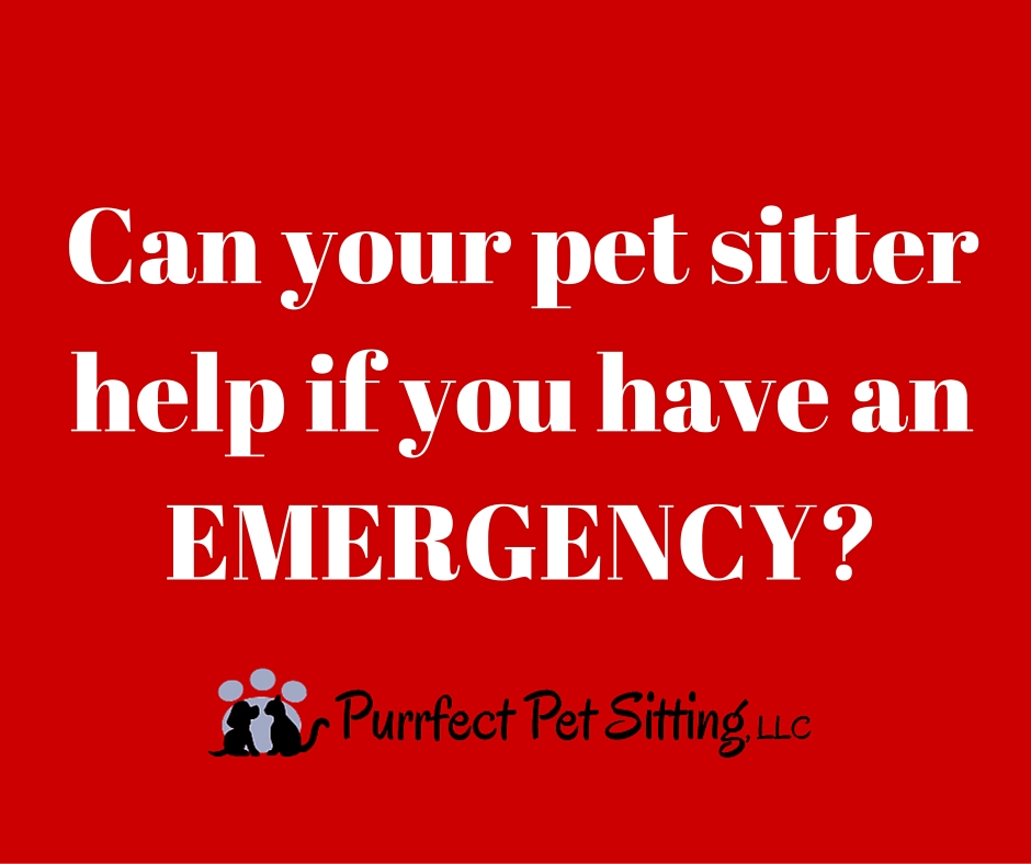 Pet sitter emergency