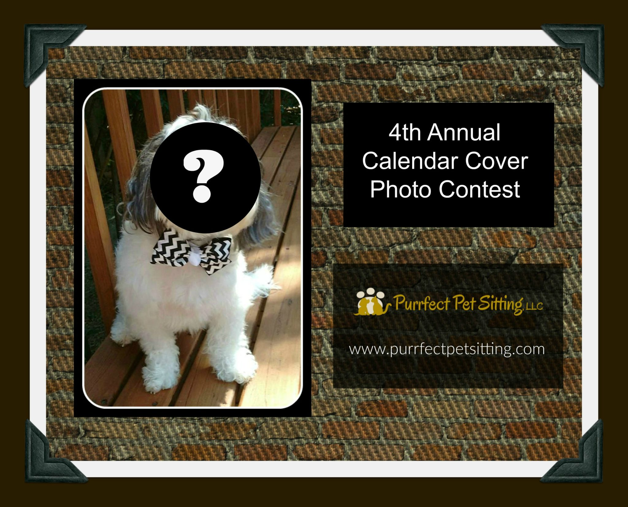 Calendar Photography Submissions : Th annual calendar cover photo contest purrfect pet