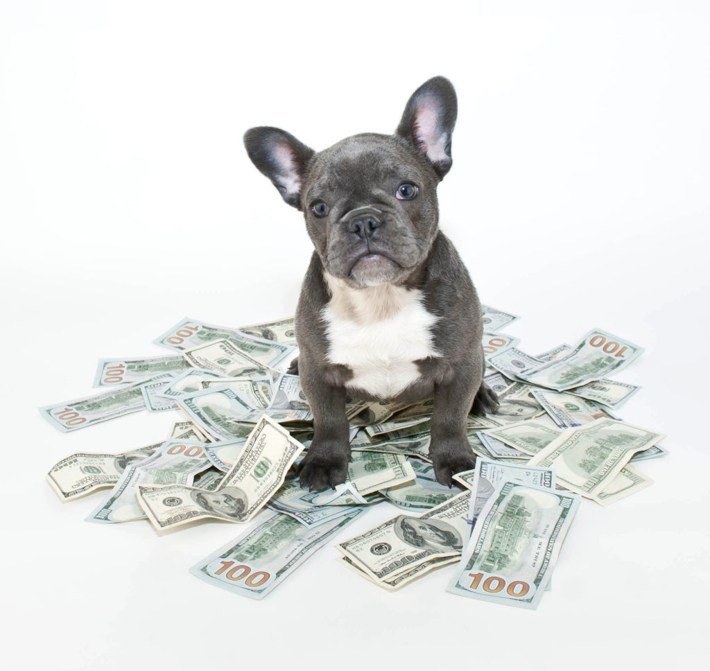 dog sitting in money