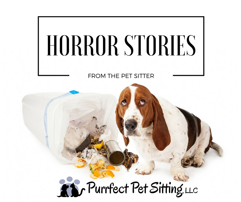 PET SITTER HORROR STORIES