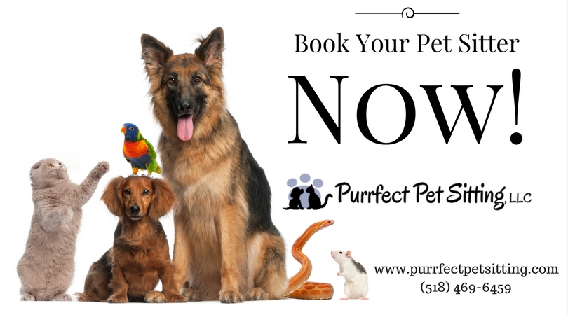 Book your pet sitter now