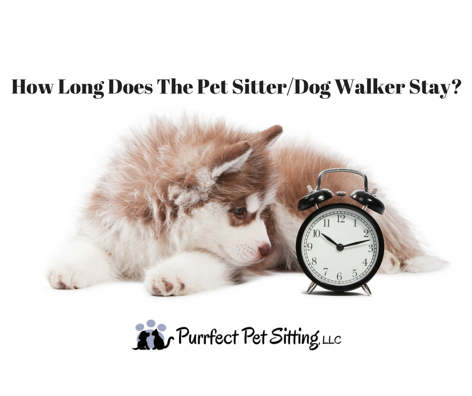 sitter walker Pet dog