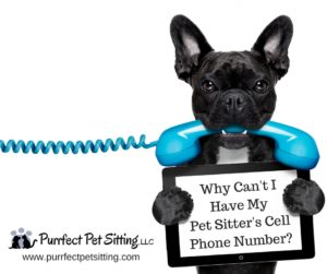 boston terrier with phone in his mouth