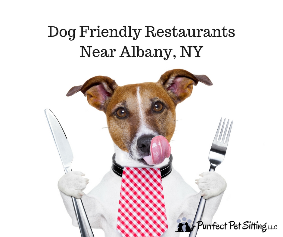 Dog friendly restaurants near Albany NY