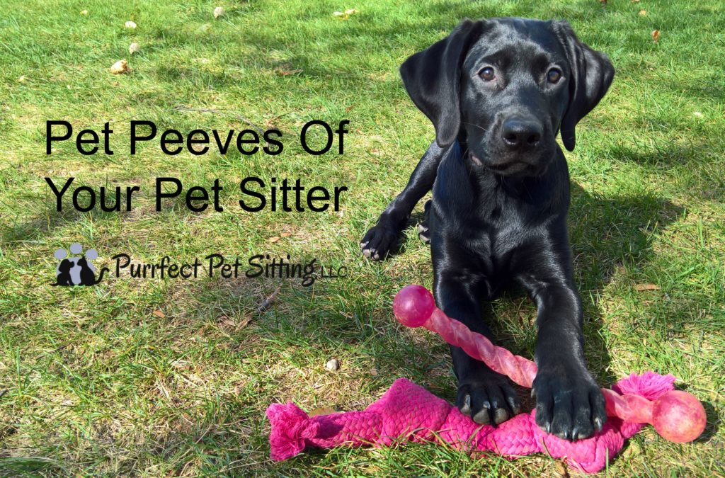 Pet Peeves Of Your Pet Sitter