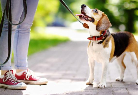 Award Winning Professional Pet Sitting Amp Dog Walking